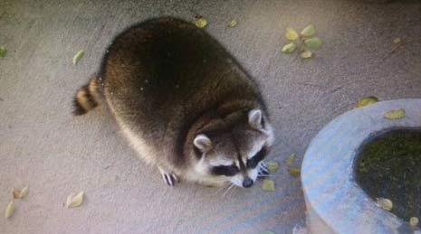 方便面君 最圆的垃圾熊猫世界