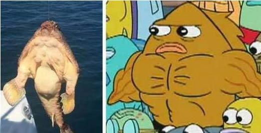 这个肌肉鱼你认识吗?满身结实肌肉一看就是练过的