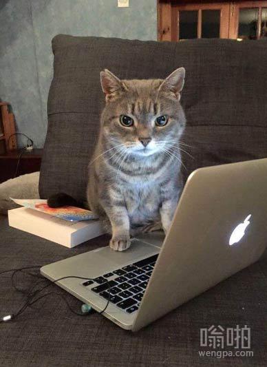 当你照顾邻居家的猫,回家后它给了你一个差评