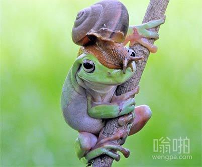 树蛙的蜗牛好基友