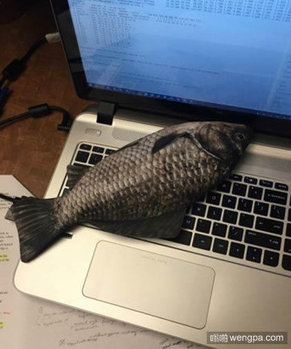 请大家吃烤鱼 苹果电脑这热度可以烤鱼了