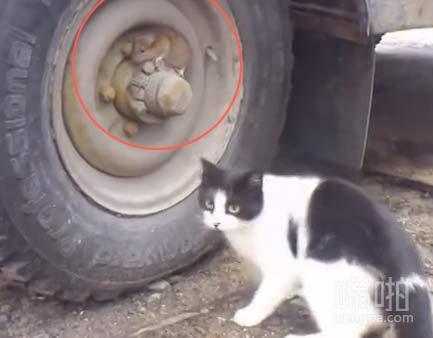 【搞笑视频】老鼠伪装躲避猫咪追捕 堪比国产谍战大片!