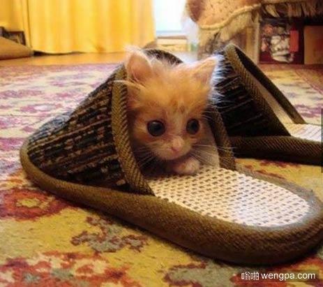 小猫找到了新的藏身之处