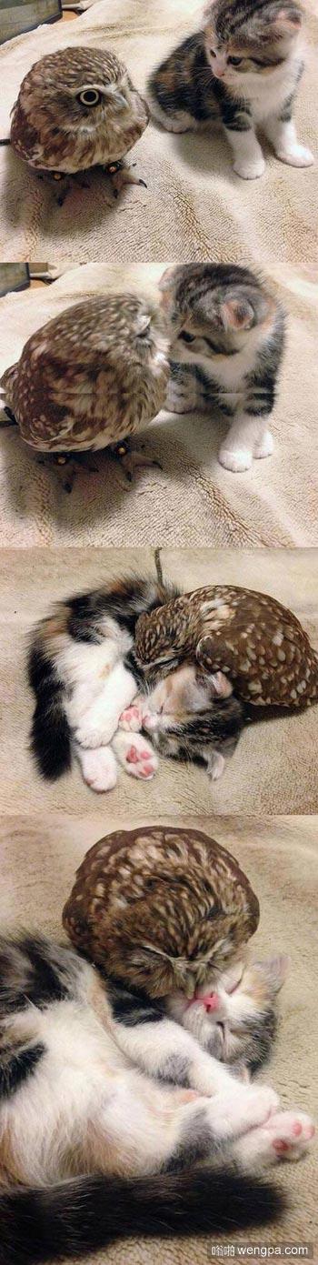 可爱的小猫和小猫头鹰