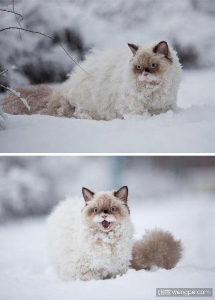 猫第一次见到了雪