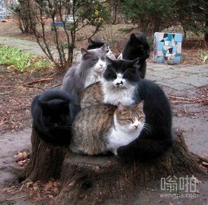 七只猫围在树桩取暖
