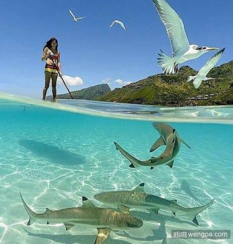 美丽的蓝色海洋、白色沙滩、比基尼姑娘,还有鲨鱼