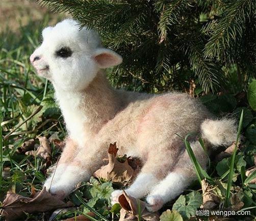 可爱的羊驼宝宝 心都萌化了