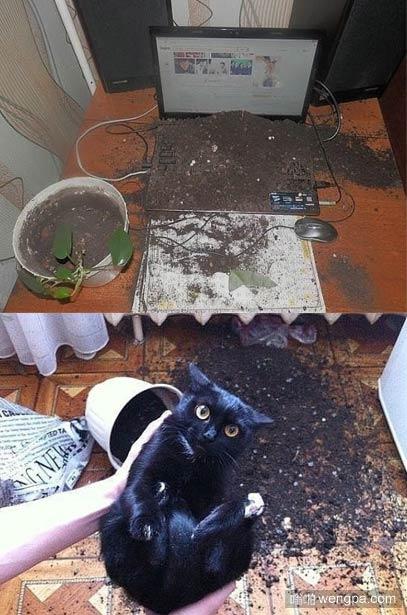 养猫的坏处