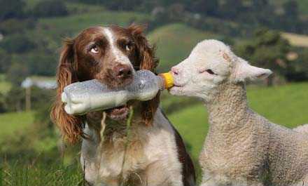 狗狗智商排名,世界狗狗排名,狗狗凶猛排名