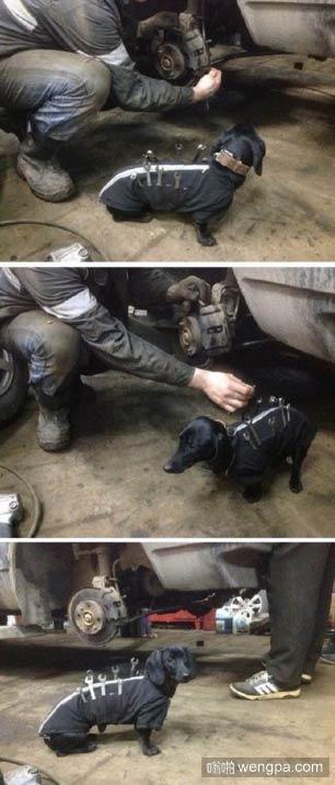 有用的狗狗 这么小就出来打工养家