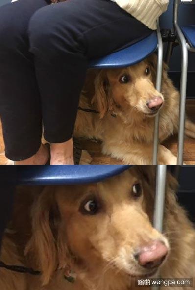 当狗狗突然看到医生向它走来的时候.