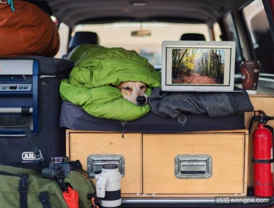 一组狗狗跟着主人去旅行的照片 太唯美了(3)