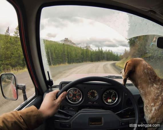 一组狗狗跟着主人去旅行的照片 太唯美了(13)