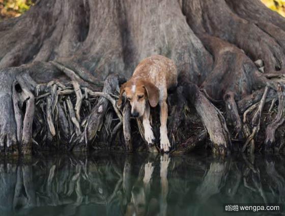 一组狗狗跟着主人去旅行的照片 太唯美了(4)