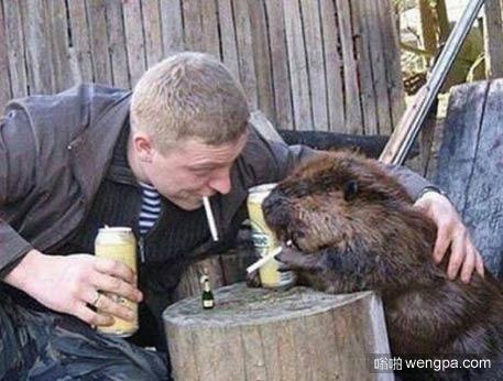 这只袋熊被教坏了 教袋熊抽烟喝酒