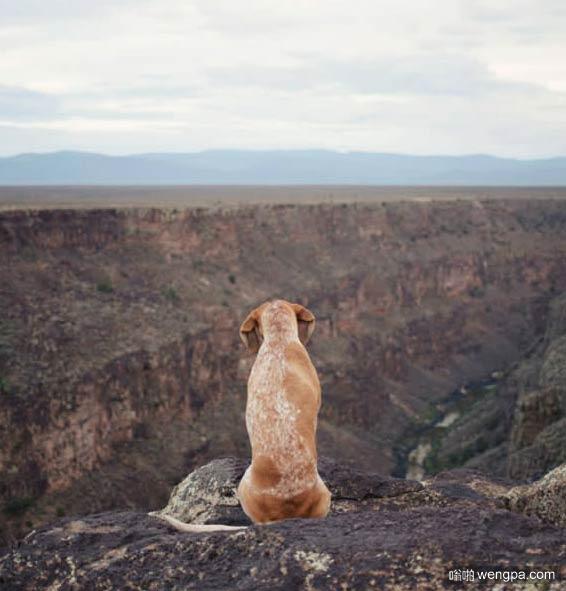 一组狗狗跟着主人去旅行的照片 太唯美了(5)