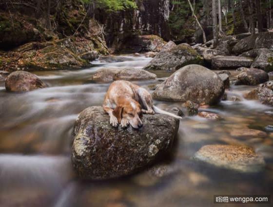 一组狗狗跟着主人去旅行的照片 太唯美了(2)