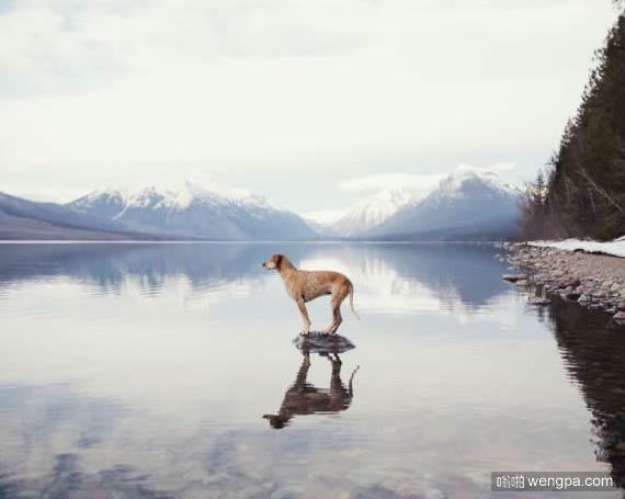 一组狗狗跟着主人去旅行的照片 太唯美了(7)