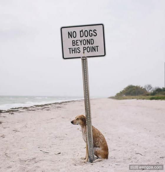 一组狗狗跟着主人去旅行的照片 太唯美了(11)