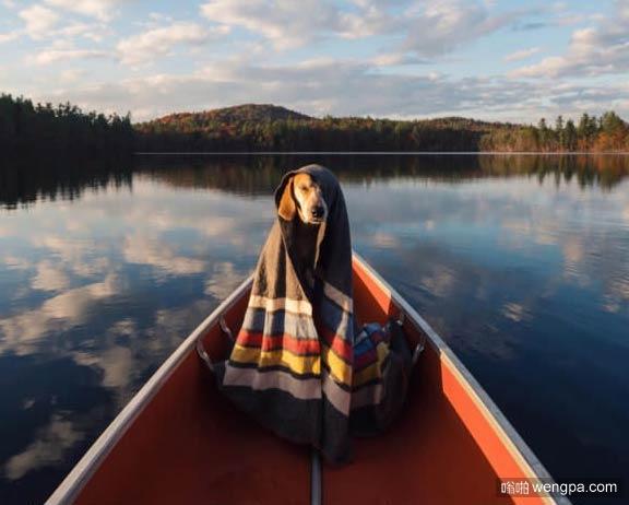 一组狗狗跟着主人去旅行的照片 太唯美了
