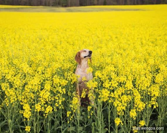 一组狗狗跟着主人去旅行的照片 太唯美了(8)