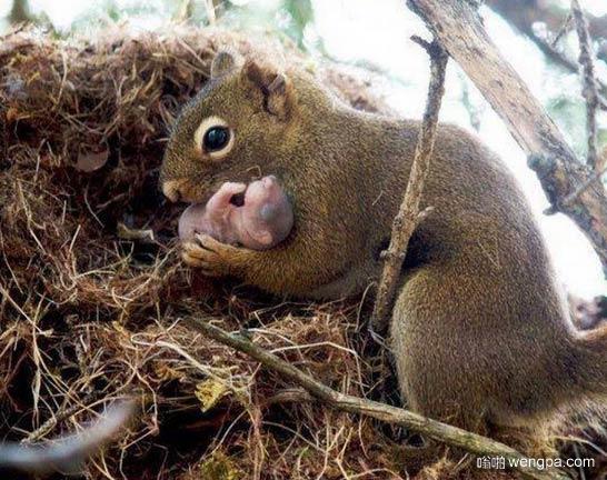 松鼠妈妈和松鼠宝宝