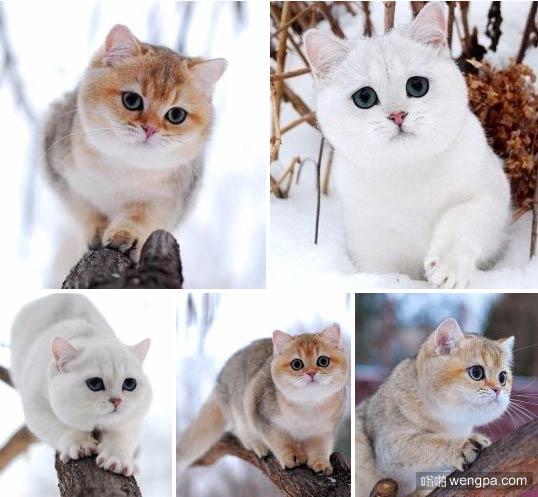 谁知道这些可爱的猫是什么品种