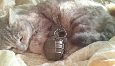 ISIS养的猫