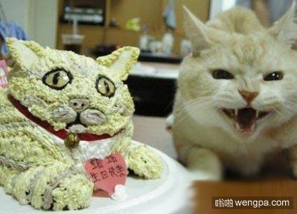 喵星人的生日蛋糕 它似乎有点不满意 猫搞笑图片