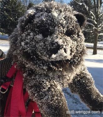 松狮下雪天出去玩