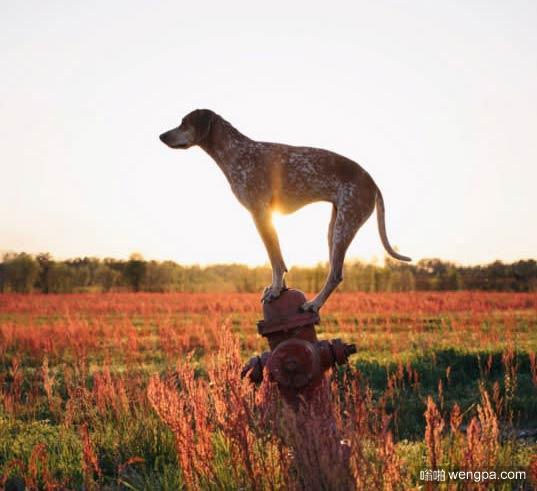 一组狗狗跟着主人去旅行的照片 太唯美了(12)