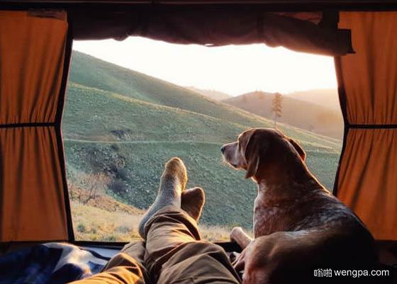 一组狗狗跟着主人去旅行的照片 太唯美了(10)