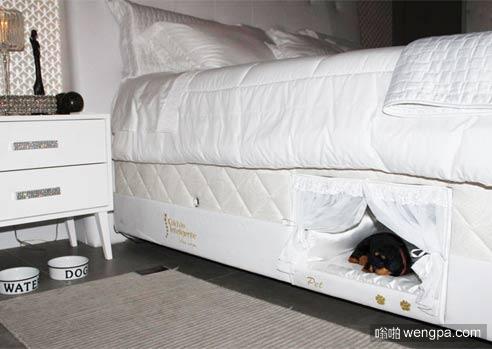 这狗狗分享了主人的床