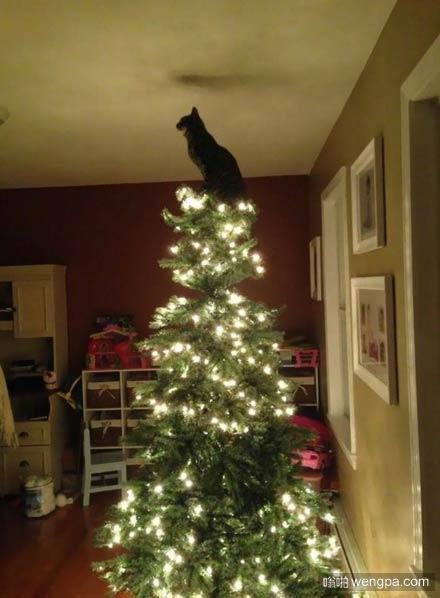 这猫以为自己就是那盏明灯