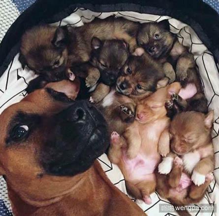 骄傲的狗妈妈晒自己与新生儿狗狗的自拍合影