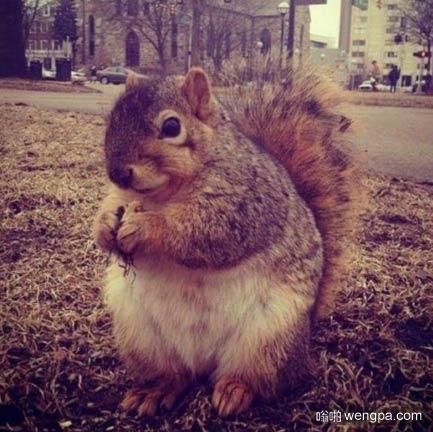 当松鼠肥胖 画风不对了