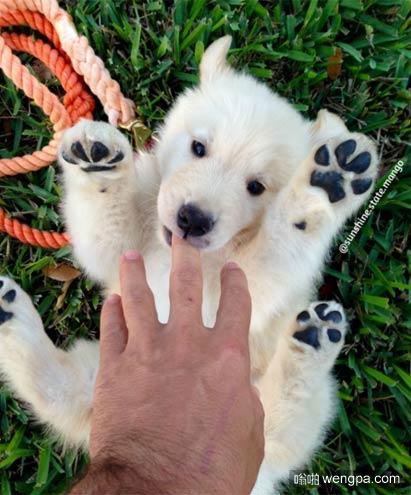 我的朋友有一个小狗?或北极熊宝宝?