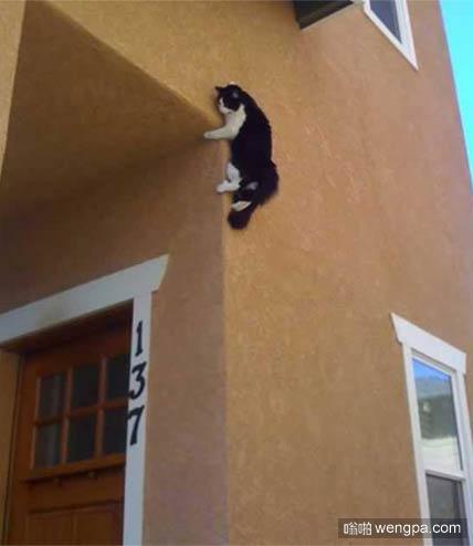 猫绝对算是攀岩高手