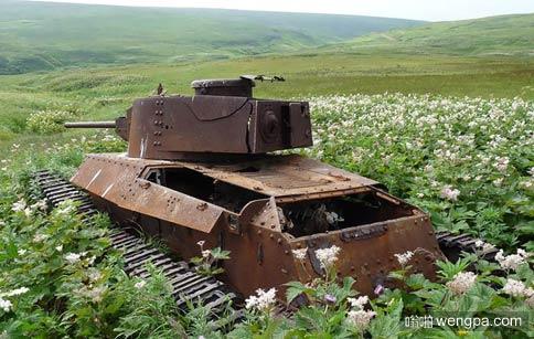 战争遗留的废弃坦克被花海包围