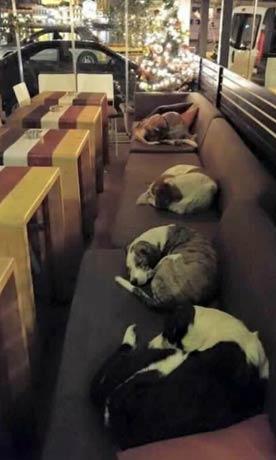 这是在希腊的一家咖啡店,好心老板每天晚上下班后打开大门让这些可怜的流浪狗进来,因此它们不会冻死在外面