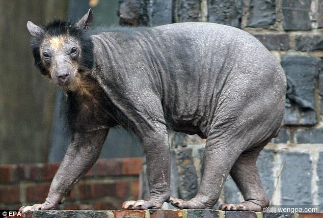 动物们的毛掉光后变得不再那么可爱(10)