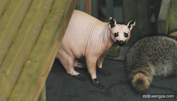 动物们的毛掉光后变得不再那么可爱(8)