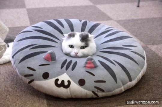要了解枕头 你必须先要成为一个枕头