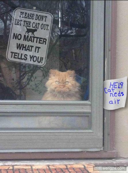 这猫做了什么竟然这样对它