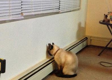 当猫和狗狗犯错时 它们也会面壁思过