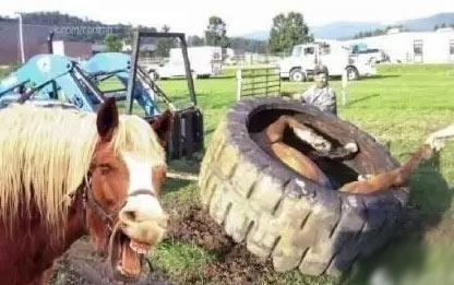 一匹幸灾乐祸的马和一头幸灾乐祸的牛