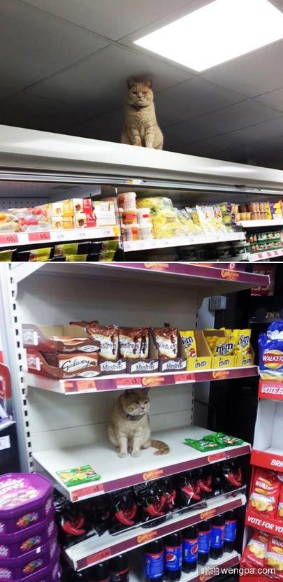 猫 搞笑图片 坏蛋猫证明了它是真正的主人 该超市在伦敦 - 嗡啪萌宠动物