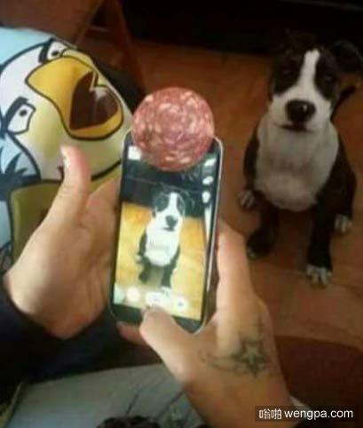 如何给狗狗拍照