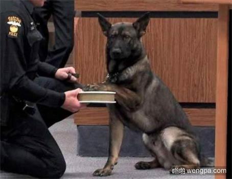 庄严的警犬宣誓就职仪式